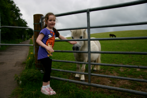 Girl patting pony behind gate